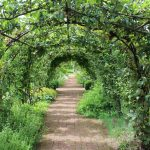 Tunnel of Fruit Trees